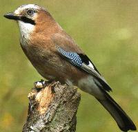 verde//Uccelli Colori vivaci uccelli Villa sporgente//in piedi mangiatoia casetta in legno